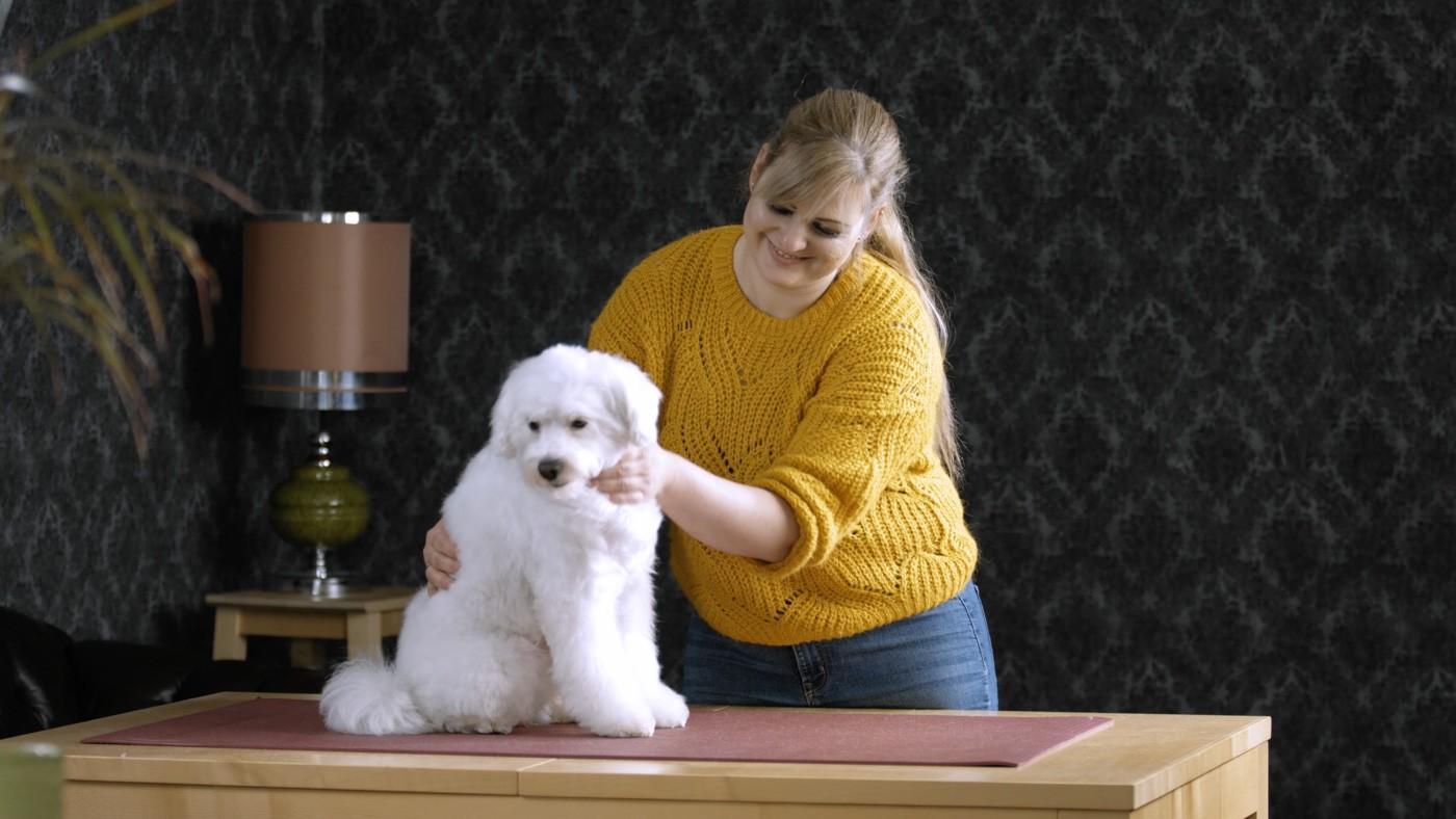 Tutorial für Hundepflege